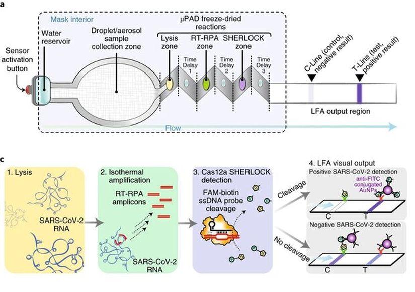 Устройство тест-системы  Nguyen et al / Nature Biotecnology, 2021